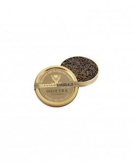 Caviale Osietra Classic - 15g - cartone nr.12 pezzi - Caviar Giaveri